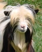 Mini Silky Head 12