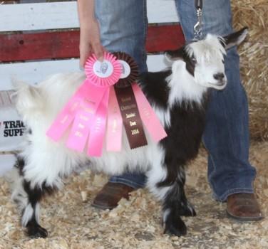 Bells Goats Farrah