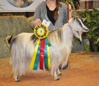 Bells Goats Cleo